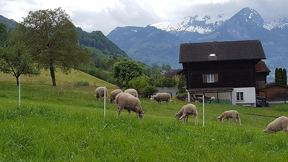 Sachseln, Switzerland, Swiss Untour
